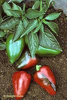 HS41-229x  Pepper - sweet apple-flavored pepper - Apple Pepper variety.