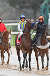 March 14, 2020: race 5 at Oaklawn Park on March 14, 2020 in Hot Springs, Arkansas. (Photo by Ted McClenning/Eclipse Sportswire/Cal Sport Media)