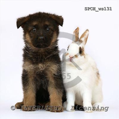 Xavier, ANIMALS, fondless, photos, SPCHWS131,#A#