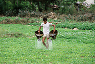 Danang, February 1988. Rice paddies near Danang. A man using the technique of the double hose.