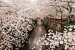 April 4, 2016, Tokyo, Japan - Trees of fully bloomed cherry blossoms bend over the Meguro River in Tokyo on Monday, April 4, 2016. People enjoyed cherry blossoms on a promenade along side of a river. (Photo by Yoshio Tsunoda/AFLO)