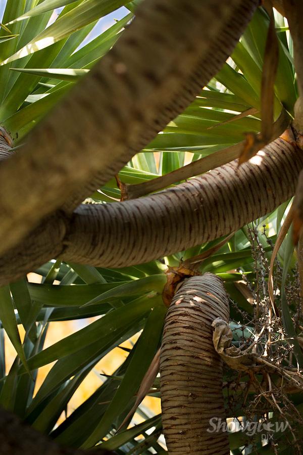 Image Ref: M293<br /> Location: Royal Botanical Gardens, Melbourne<br /> Date: 10.06.17