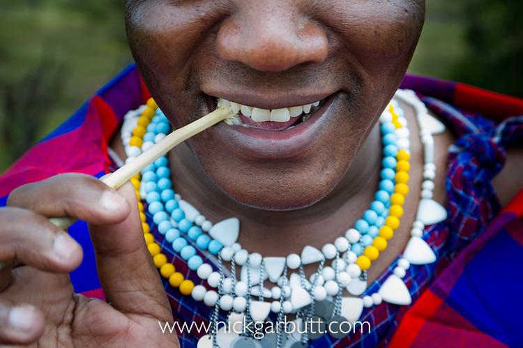 Masaai / masai woman using traditional stick to clean her teeth. Ngorongoro Conservation Area / Serengeti National Park, Tanzania. March 2014.