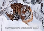 Carl, ANIMALS, wildlife, landscapes, photos(SWLA3929,#A#)