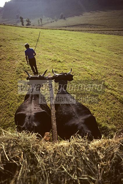 Europe/France/Auvergne/15/Cantal/ env d'Allanche: Fenaison avec un attelage de vaches équipées d'un joug [ <br /> PHOTO D'ARCHIVES // ARCHIVAL IMAGES<br /> FRANCE 1980