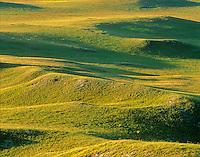 Mixed-Grass prairie at West Butte in Grand River National Grassland, southwest of Lemmon, South Dakota, AGPix_0296.