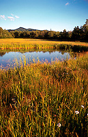 Scenic of marshy wetlands in New Hampshire. New Hampshire.
