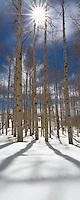 A sunburst captured among aspen trees in fresh snow.