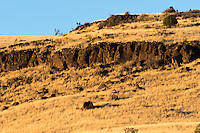 The golden, rocky hills above Prescott Valley, AZ seen in the golden hour during wintertime.  The grasses are all brown, but a few shrubs are prodly standing against the cold.