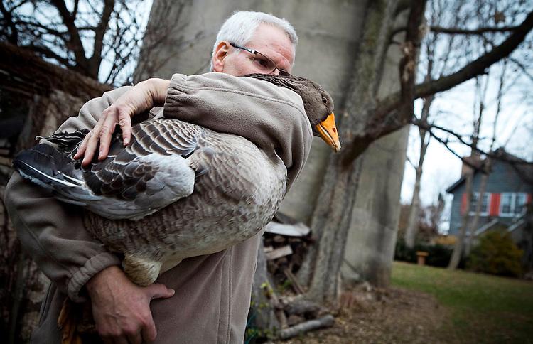 112310walkcol27p1, mjs, news - David Moga hugs Gertie, his pet goose by the pond backyard, in Cedarburg on Tuesday, November 23 2010. PHOTO BY MARK ABRAMSON/MABRAMSON@JOURNALSENTINEL.COM