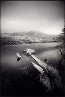 Downed trees in Adirondack lake<br />