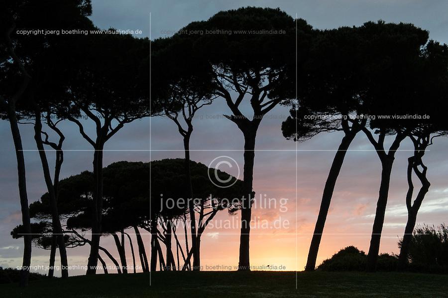 ITALY Tuscany, Baratti, pine trees at Golfo di Baratti / ITALIEN, Toskana, Baratti bei Piombino, Schirmkiefer am Golf von Baratti