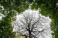 GERMANY, Ruegen, beech forest / DEUTSCHLAND, Mecklenburg-Vorpommern, Laubwald mit Buchen im Nationalpark Jasmund