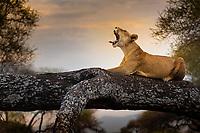 Tarangire National Park wildlife, in Tanzania, Africa