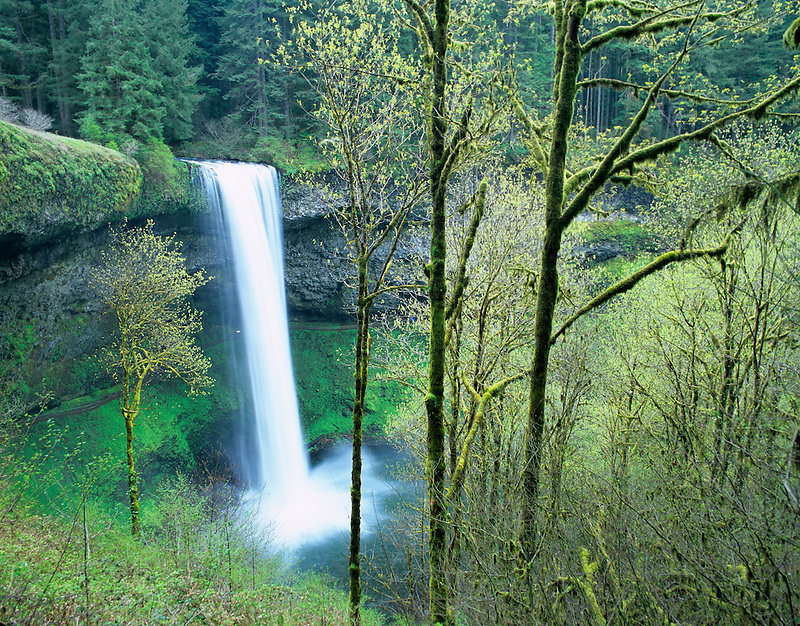 South Falls with early spring growth.  Silver Falls State Park, Oregon