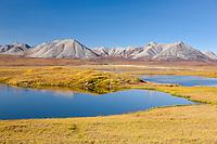 Tundra pond in Atigun Canyon, Endicott Mountains of the Brooks Range, Arctic, Alaska.