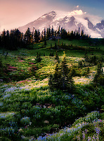 Wildflower meadow and Mt. Rainier in Mt. Rainier National Park, Washington