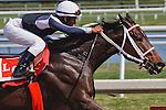 Rajiv Maragh works Tackleberry between races at Gulfstream Park. Hallandale Beach, Florida. 02-18-2011