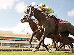 HALLANDALE BEACH, FL - MARCH 04: #1 Dream Dancing with Julien Leparoux up wins the Herecomesthebride Stakes (G3) Gulfstream Park. (Photo by Arron Haggart/Eclipse Sportswire/Getty Images)