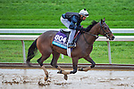 October 28, 2015 :   Camelot Kitten, trained by Chad C. Brown and owned by Kenneth L. and Sarah K. Ramsey, exercises in preparation for the Breeders' Cup Juvenile Turf at Keeneland Race Track in Lexington, Kentucky on October 28, 2015.  Scott Serio/ESW/CSM