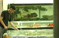 FOOD: REEF FISH: HONG KONG<br /> Coral fishes in tanks outside restaurants in Lei Yue Mun, Hong Kong. The fishes contain bacteria that can be toxic.<br /> Photo by Richard Jones/sinopix<br /> ©sinopix