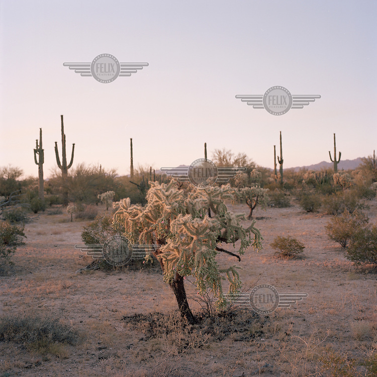 The Sonoran Desert during a search and rescue operation by a group looking for missing migrants. During the search the group found human remains at the Organ Pipe Cactus National Monument, some five miles from the Mexican border, believed to be of two migrants who died seeking to cross the Sonoran desert, which reaches extreme temperatures at this time of year.