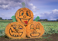 Large bails of hay painted with pumpkin faces. Near Eugene, Oregon