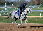 November 3, 2020: Next, trained by trainer Wesley A. Ward, exercises in preparation for the Breeders' Cup Juvenile at Keeneland Racetrack in Lexington, Kentucky on November 4, 2020. Jessica Morgan/Eclipse Sportswire/Breeders Cup