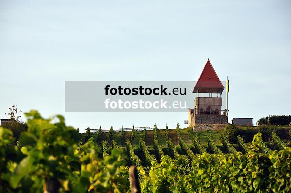 Schildbergturm, der Weinbergsturm in den Weinbergen des Schildbergs von Sulzheim