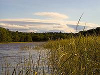Marsh grasses along river<br />