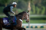 OCT 29: Breeders' Cup Turf Sprint entrant Shekky Shebaz, trained by Jason Servis, at Santa Anita Park in Arcadia, California on Oct 29, 2019. Evers/Eclipse Sportswire/Breeders' Cup