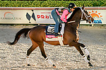 January 22, 2021: Cross Border exercise as horses prepare for the 2021 Pegasus World Cup Invitational at Gulfstream Park in Hallandale Beach, Florida. Scott Serio/Eclipse Sportswire/CSM