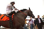 Majestic Hussar wins the 1st race on Florida Sunshine Millions Day at Gulfstream Park.  Hallandale Beach Florida. 01-19-2013