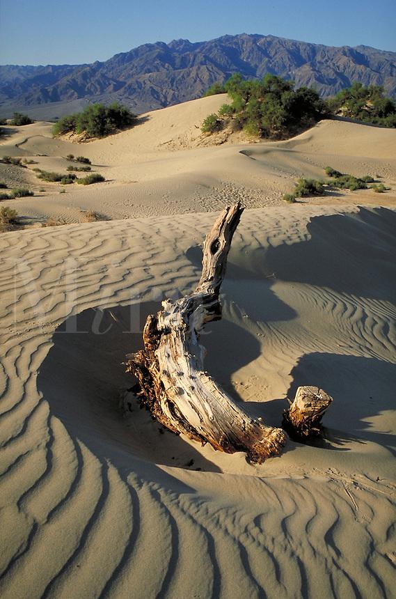 Sand Dunes in California's Death Valley National Monument. Heat, Dry. California USA Death Valley.