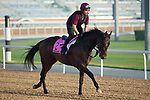 DUBAI,UNITED ARAB EMIRATES-MARCH 30: Mendelsohn,trained by Aidan O'Brien,exercises in preparation for the UAE Derby at Meydan Racecourse on March 30,2018 in Dubai,United Arab Emirates (Photo by Kaz Ishida/Eclipse Sportswire/Getty Images)