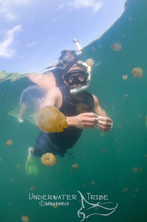 Jellyfish Lake, Kakaban Island, Berau, Kalimantan, Borneo, Indonesia, Pacific Ocean