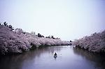 Japanese tourists on a boat in the inner moat of Hirosaki Castle, Aomori, to enjoy cherry blossoms.<br /> <br /> Les touristes japonais sur un bateau dans le fossé intérieur du château de Hirosaki, Aomori, pour profiter des fleurs de cerisier.