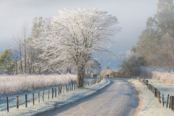 Frost and a light snow in early morning light, Cades Cove, Great Smoky Mountains.<br /> <br /> ARTIST CHOICE: 30x45 Lumachrome/Acylic