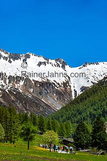 Italien, Suedtirol (Trentino - Alto Adige), Prettau - Weiler Kasern: Wandergruppe am Ende des Ahrntals, Italiens noerdlichste Gemeinde im Naturpark Rieserferner-Ahrn, im Hintergrund die Berge der Grossvenedigergruppe | Italy, South Tyrol (Trentino - Alto Adige), Prettau (Predoi) - district Kasern (Casere), group of hikers at valley's end of  Tauferer Ahrntal (Valli di Tures e Aurina), at background Venediger Group mountains