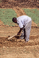 Niamey, Niger.  African Farmer Using a Daba, a Nigerien Hoe for Weeding.