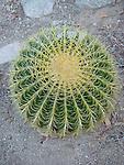 Flora and Fauna botanical photography Cactus, palm desert, green, yellow, red, yucca,