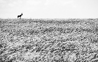 Hartebeests commonly stand on mounds to get a better view of their surroundings.