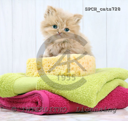 Xavier, ANIMALS, cats, photos+++++,SPCHCATS728,#a# Katzen, gatos