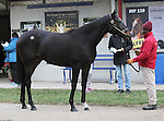 Hip 20 Bauble Queen at the Fasig Tipton Kentucky November Sale.  Consigned by Taylor Made Sales.  November 03, 2012.