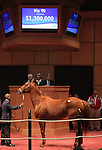 10  November  2009 Fasig TIpton November Breeding Stock sale.  Hip #90 Ginger Punch, consigned by Adena Springs, brought a bid of $1,300,000 but did not meet reserved price.  She was sold afterwards for $1,600,000 to KATSUMI YOSHIDA.  Champion GInger Punch is a multiple Graded Stakes winner, with career earnings of $3,065,603.  She is in foal to Bernardini.