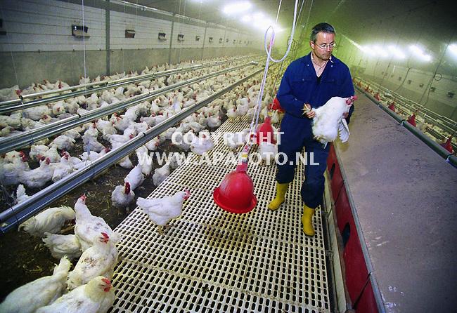Barneveld , 180500  Foto:Koos Groenewold / APA<br />De nieuwe vleeskuikenouderdierenstal bij IPC dier in Barneveld . Het `minibeunsysteem` is het opstapje naar de legnesten.