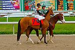 February 21, 2015: Freudie Anne with Mike E Smith up in the Rachel Alexandra Stakes at the New Orleans Fairgrounds Risen Star Stakes Day. Steve Dalmado/ESW/CSM
