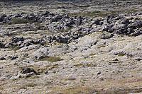 Racomitrium-Heide, Racomitrium Moos, Rhacomitrium-Heide, Rhacomitrium Moos, Zackenmützenmoos, Zackenmützen-Moos, Rhacomitrium spec., Steinwüste, Felsen, Flechten und Moose, Moosheide, Moosheiden, Vulkanlandschaft, Lavafeld, Lavafelder, Südwesten von Island