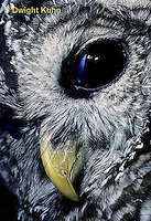 OW01-093z  Barred owl - blinking eye - Strix varia