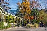 Italien, Suedtirol, Meran: Herbststimmung an der Winterpromenade | Italy, South Tyrol (Alto Adige-Trentino), Merano: autumn scene along Winter Promenade